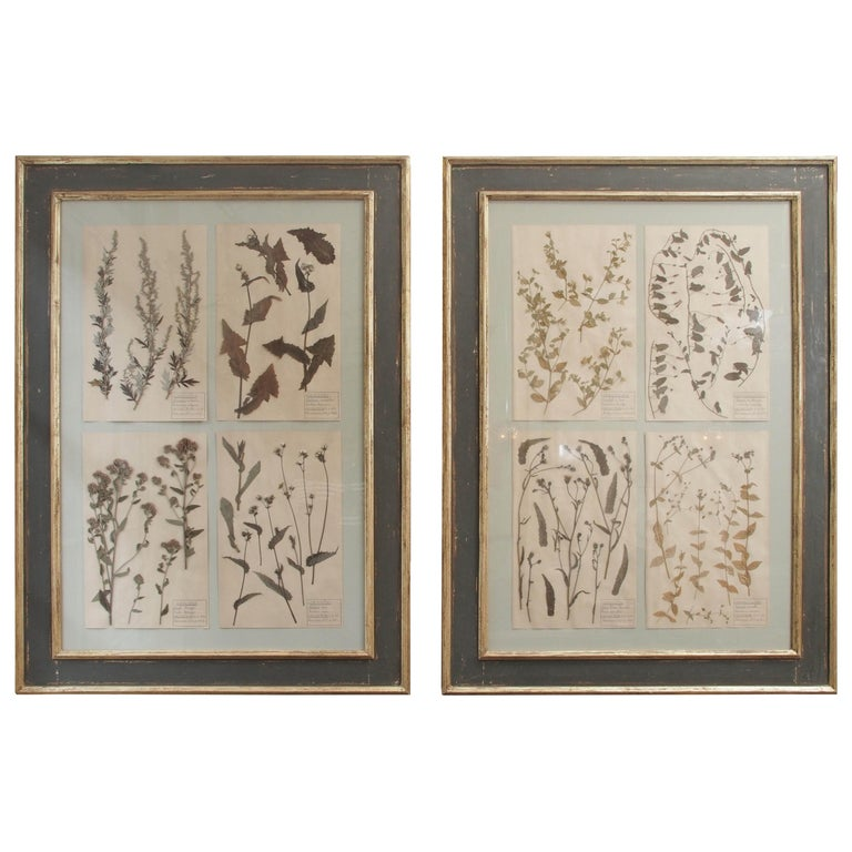 Pair of 19th Century French Framed Botanicals For Sale