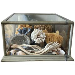 Large 19th Century Display Case Filled with Sponges and Coral