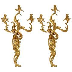 Gilt Bronze Louis XV Style Three-Light Wall Sconces, Pair