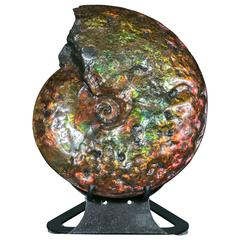 Exceptional Ammonite Fossil from Canada