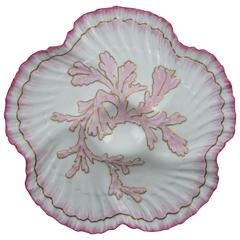William Brownfield English Staffordshire Shell Edge & Coral Oyster Plate