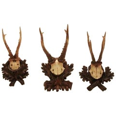 Collection of Nine Black Forest Antler Mounts on Hand-Carved Wood Plaques Priced