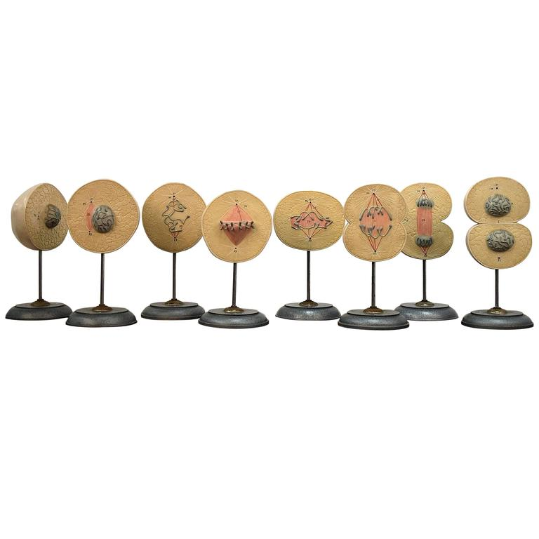 1960s Complete Set of Mitosis / Cell Division Models For Sale