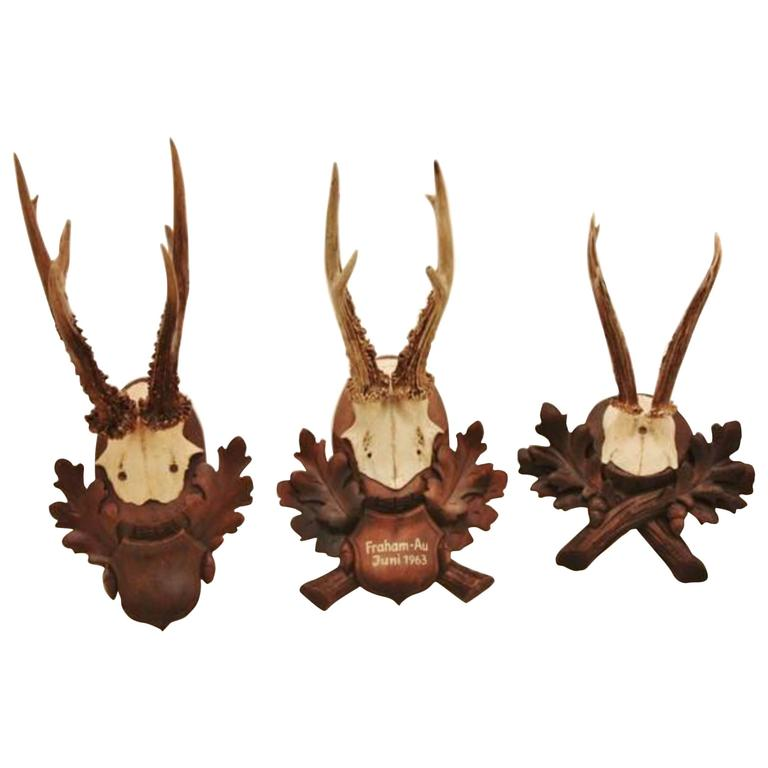 Collection of Nine Black Forest Antler Mounts on Hand-Carved Wood Plaques