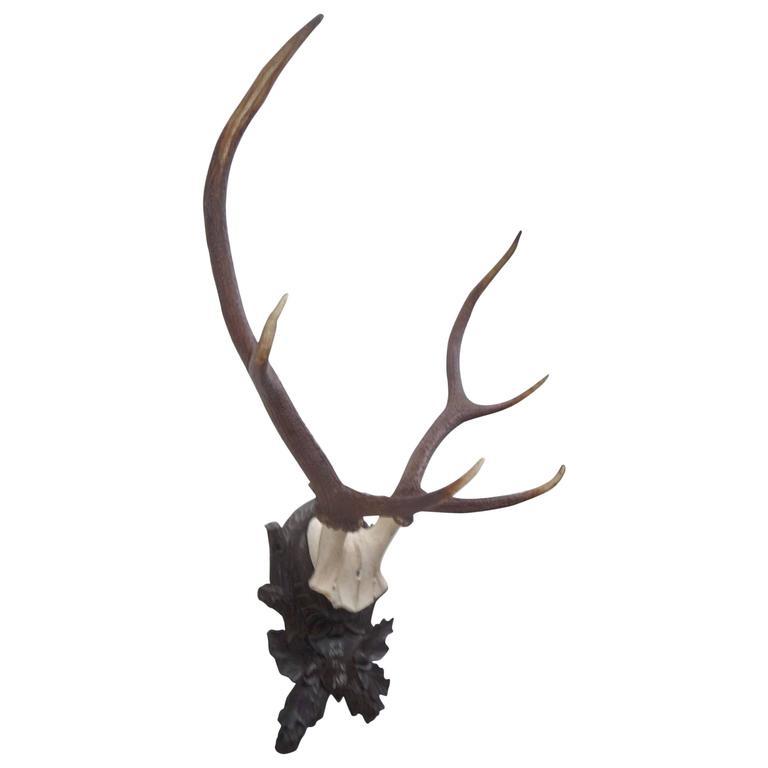 Stately Black Forest Antler Mount on Carved Walnut Plaque 1