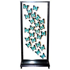 Butterflies Ulysses Flight Arranged under Square Framework