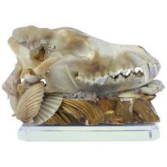 Decorated Coyote Skull / Art Accessory