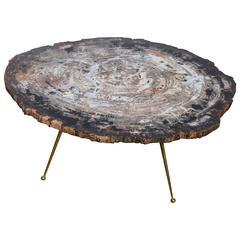 Free Shape Petrified Wood Coffee Table