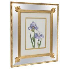 Iris Watercolor by Dorothy McDowell, Signed, Gilt Custom Mirror Frame