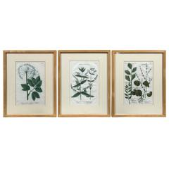 Set of Three Hand-Colored Botanical Prints, Late 18th Century