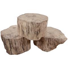 Sycamore Stumps
