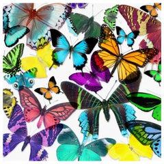 Acrylic Glicee Print of Butterflies