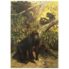 "Antique German School, Teaching Chart, Poster ""Chimp"""