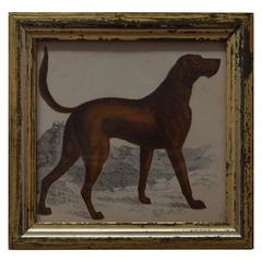 Antique Print of a Sporting Dog, English, circa 1850