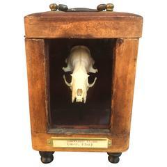 Skeleton Desk Display Box