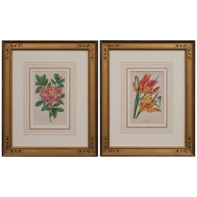 Pair of Hand-Colored Floral Engravings