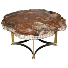 Impressive Fossilized Wood Cocktail Table