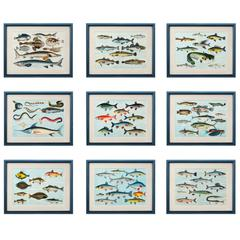 Tropical Fish Prints
