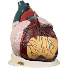 Vintage Heart Model
