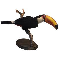 Mounted Taxidermy Toco Toucan Bird