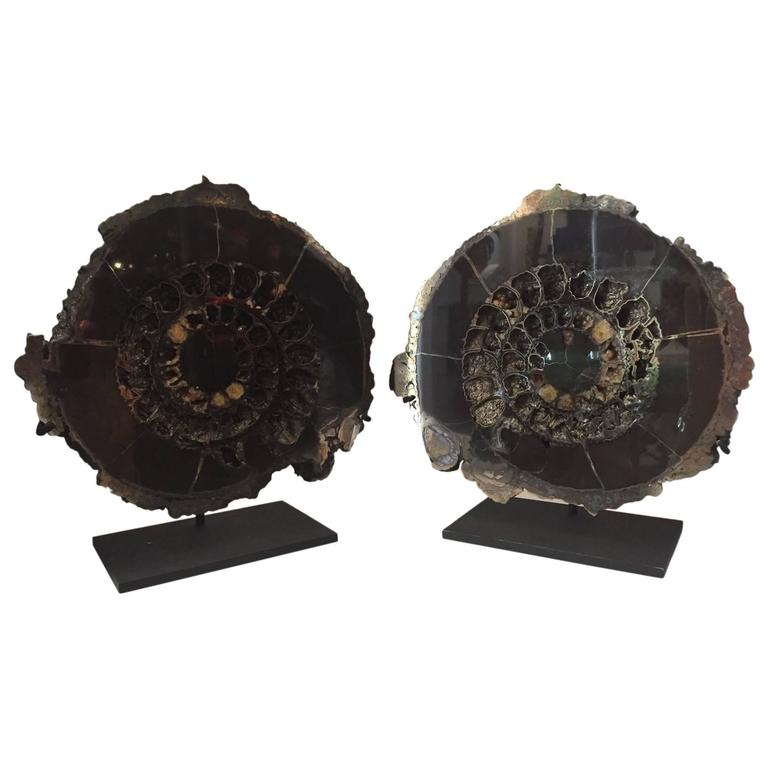Jurassic Era Pair of Pyritized Russian Ammonite Fossils Mounted on Metal Bases 1