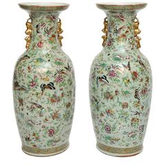 Superb Pair of 19th Century Celadon Painted Vases