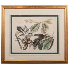 Audubon Print of the Yellow-Billed Cuckoo