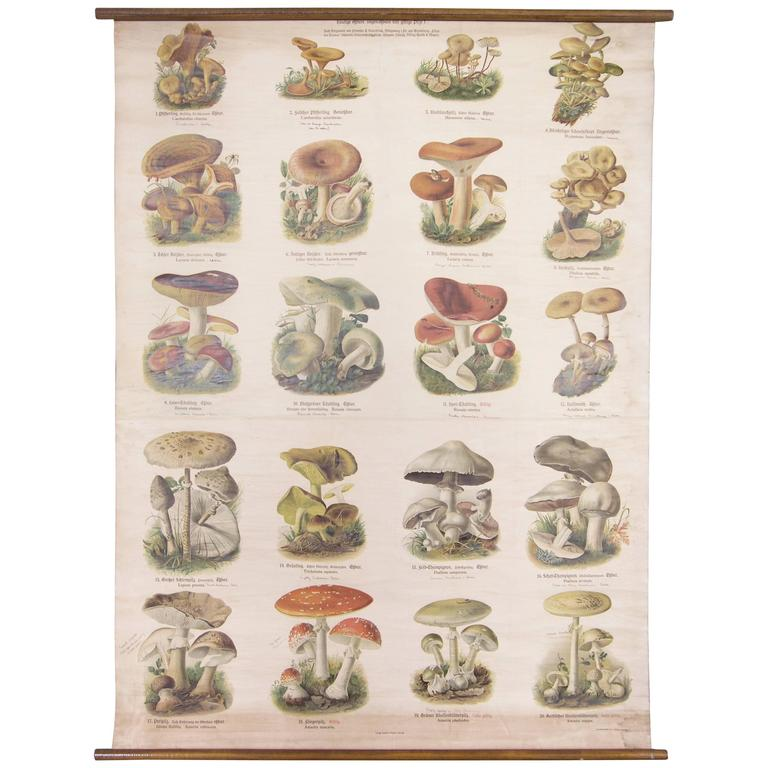 "Vintage Leipzig ""Mushrooms"" Chart, Veriag, Quelle & Meyer Print Vegatation Art"