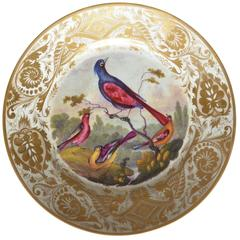 Derby Porcelain Bird Plate