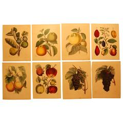 Set of Eight Hand Colored Prints of Various Fruit, circa 1840-1850
