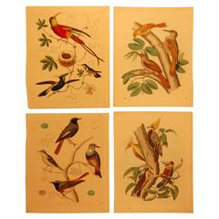 Set of Four Hand Colored 19th Century Prints of Various Birds, circa 1844-1861