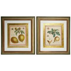 Pair of 18th Century Fruit Prints by Monceau, Custom Framed