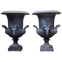 19th Century Rare Pair of Cast Iron Campana Urn Head of Ram and Handles