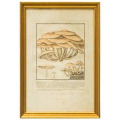 27 French Mushroom Prints