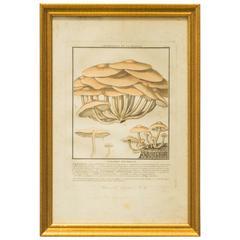 40 French Mushroom Prints