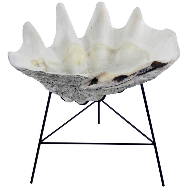 Giant Natural Tridacna Clam Shell On Custom Made Wrought