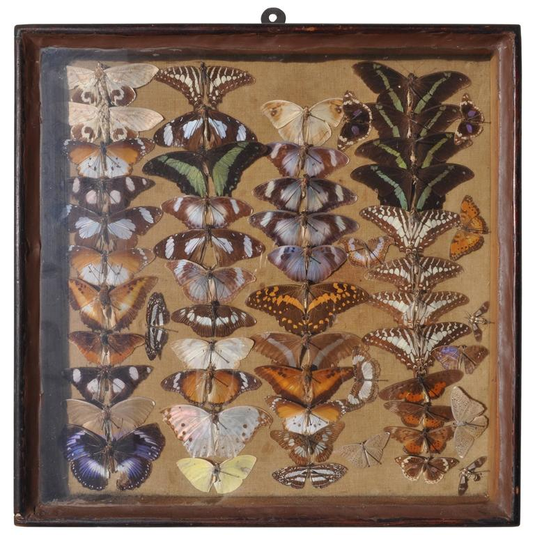 Vintage Butterfly Taxidermy Display Case At 1stdibs