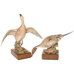 Pair of Royal Worcester Game Bird Series of the American Pintail