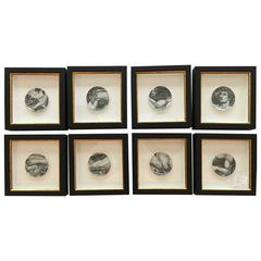"Set of Eight Framed Fornasetti Porcelain ""Adam"" Coasters"