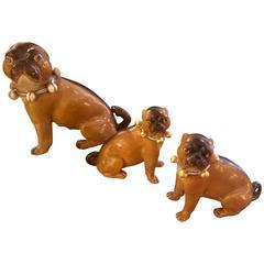Adorable Trio of Staffordshire Bulldogs