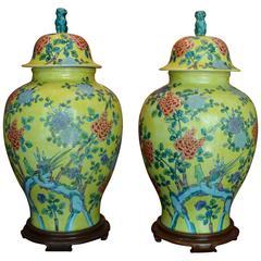 Pair of Large Vintage Asian Lidded Ginger Jars
