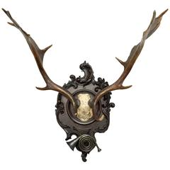 19th Century Fallow Trophy on Black Forest Plaque with Hunt Horn