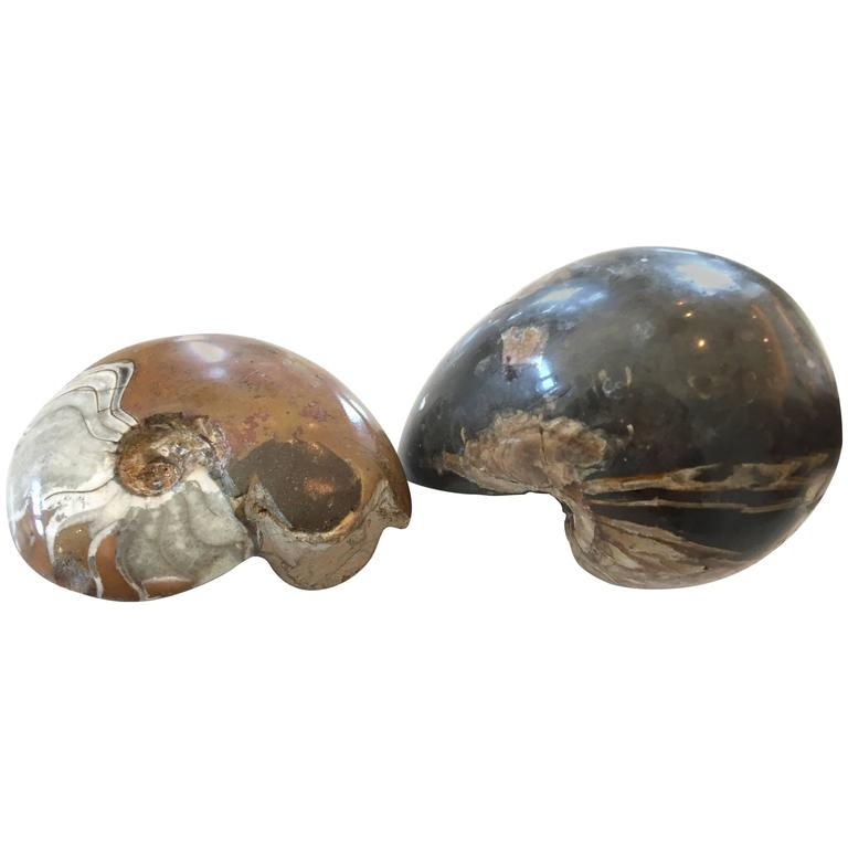 Two Million Year Old Ammonites of a Nautilus and Crustacean For Sale
