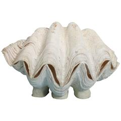 Large Intact Footed Gigas Clam