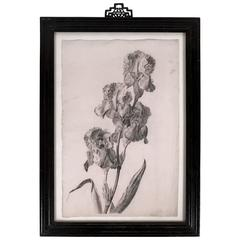 Exquisite Charcoal Drawing of Irises, circa 1837