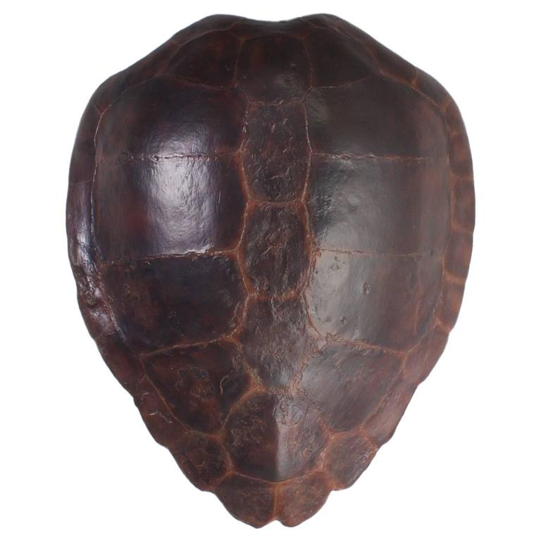 Large Fiberglass Loggerhead Turtle Shell At 1stdibs