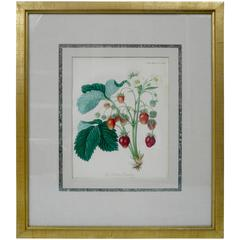 Four Framed Early 19th Century English Botanical Prints of Fruit