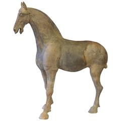 Ancient Chinese Horse Tang Dynasty