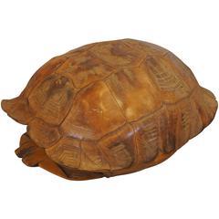 Large Natural Specimen Tortoise Shell