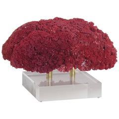Large Red Pipe Organ Coral Specimen